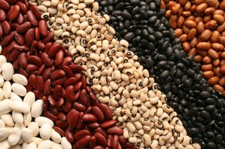 Horror-of-beans