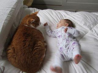 Cat-vs-baby